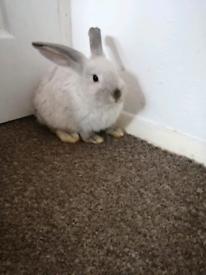 2 Rabbit bunnies