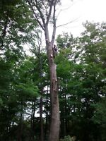Arborist - Tree Removals and Pruning
