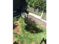 Medium size pond set up