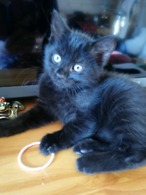 SOLD*****Beautiful kittens