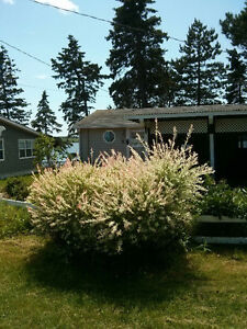 Unwind by the water! Cosy waterfront cottage on leased lot.
