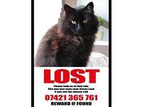 Lost cat - last seen on street lane
