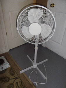 white fans
