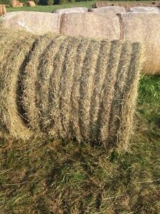 20-4x5 Round Bales of 2nd Cut Hay.