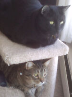 Need a loving home for 2 awesome cats