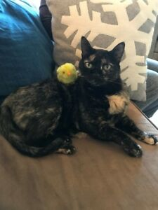 Lost Cat in Tuscany Calgary