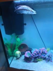 Cichlids fish tank tropical fish