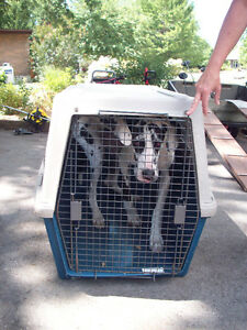 Large Kennel