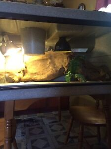 Large reptile cage (complete set up)