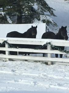 Horse Boarding & Opportunities for assisting with Horses