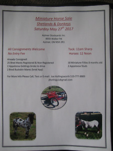 Miniature horse and pony sale