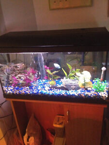 Looking to rehome 29G Tank/Fish