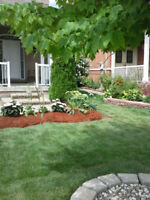 Grass Cutting & Lawn Services