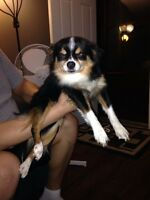 Looking for female dog to breed
