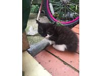 Cute black kitten free