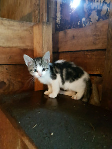 Kittens free to good homes