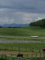 Horse Barn Job