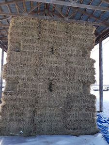 SMALL SQUARE GRASS HAY BALES FOR SALE