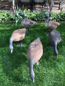 Hunting Decoys - CANADA Geese