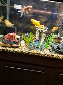 allsorted fish