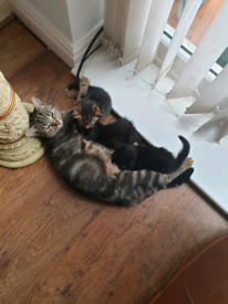 Cat and 3 kittens