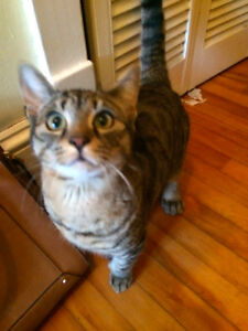 MISSING TABBY QUINPOOL AREA