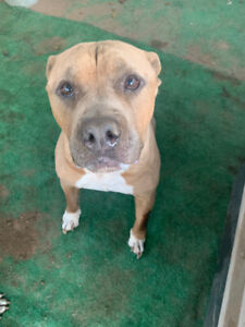 Tyson is Looking for a Foster or Foster to Adopt Home