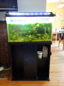 Fish tank 40 gallons with stand