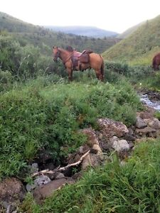 Mountain Horses for Guide/Outfitter Prince George British Columbia image 6