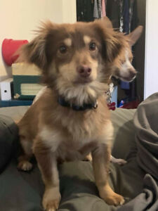 Justin Available for Adoption - Homes for Paws Dog Rescue