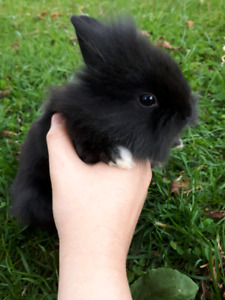 Four Baby Rabbits Left!!