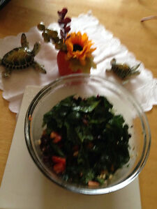 Naturopath - Meals management for Optimal Health West Island Greater Montréal image 1