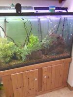 custom 110 gallon aquarium