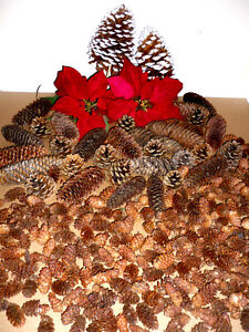 Poinsettia and Pinecones .. As shown .. Clean,SmokeFree Cambridge Kitchener Area image 4
