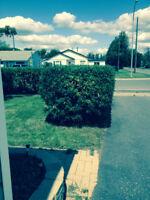 Yard and Garden Clean-up/Maintenance