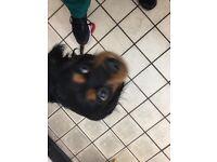 Dog found Salford