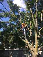 Tree climber/climbing arborist/storm cleanup/portable saw mill