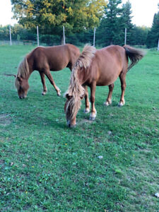 cheval à vendre - horse for sale