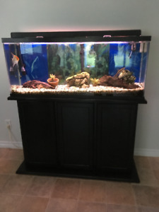 50 Gal Aquarium, Fluval Filter, Cabinet