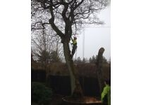 Tree services, fencing, stump grinding, soft landscaping and garden maintenance.