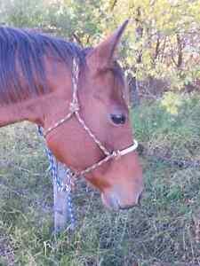 Daughter of Solanos Peppy San  Regina Regina Area image 5
