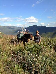Mountain Horses for Guide/Outfitter Prince George British Columbia image 2