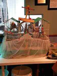 Love bird pair + cage for sale