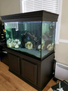 Aquarium 150 gallons eau douce