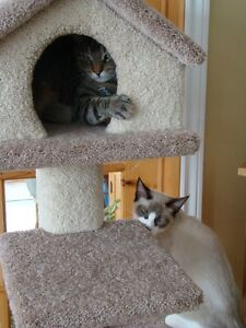 Cat tower wanted
