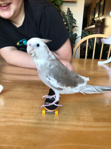 Adopt Local Birds in Fraser Valley | Pets | Kijiji Classifieds