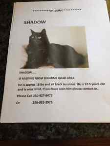 Shadow is lost