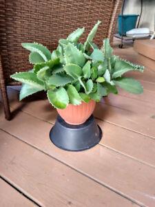 indoor real plants