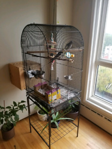 Pair of cocktails with a big cage and breeding box