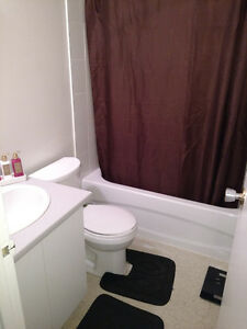Looking for a quiet clean roomate